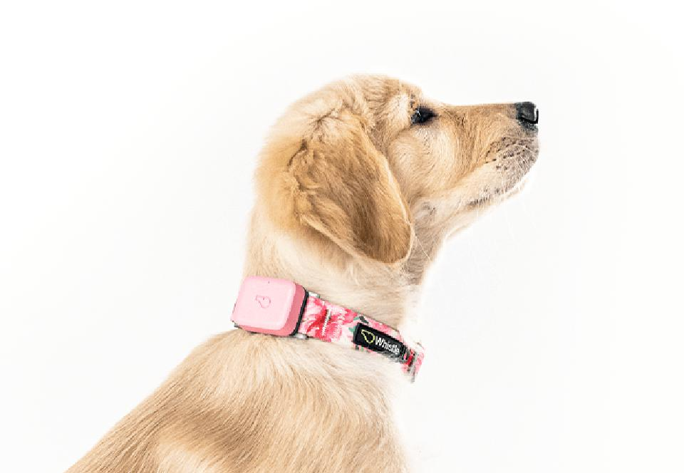 dog with gps tracker