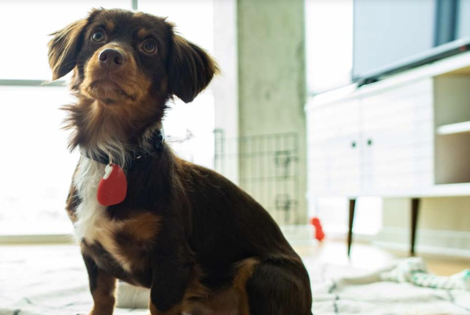 dog with gps tracker