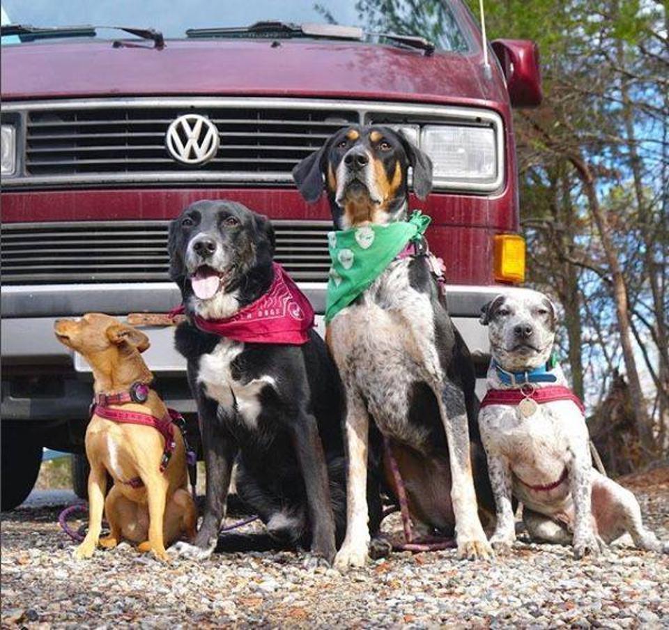 dogs in front of van