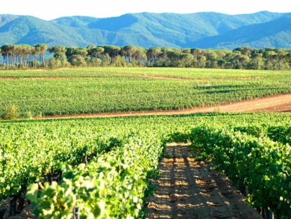 Provence Debuts A New Wine Designation