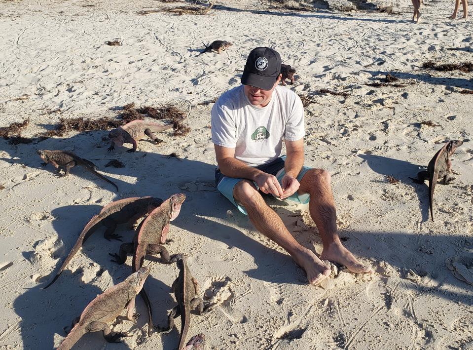 Feeding Bahamian Rock Iguanas