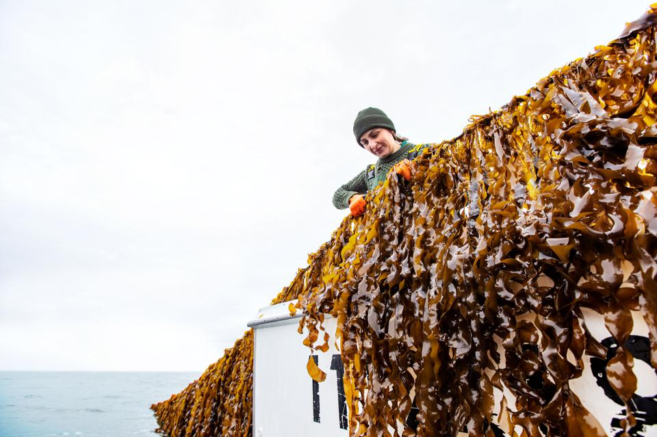 Atlantic Sea Farms CEO Brianna Warner was helped by Coastal Enterprises, Inc.