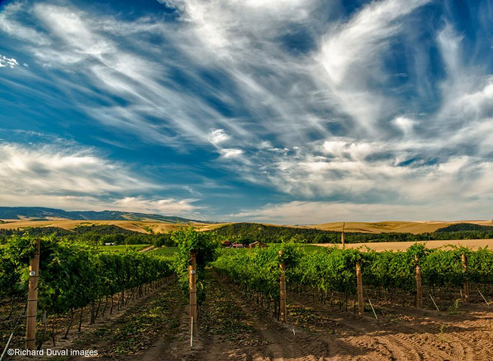 Walla Walla wine, Washington wine, Oregon wine