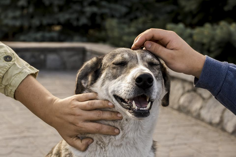 Meet the dogs of Chernobyl