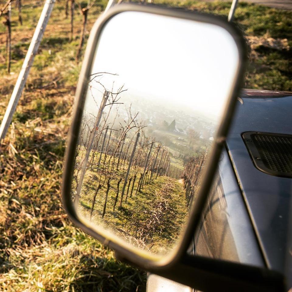 Schneider Vineyards Reflected in a Car's Side Mirror