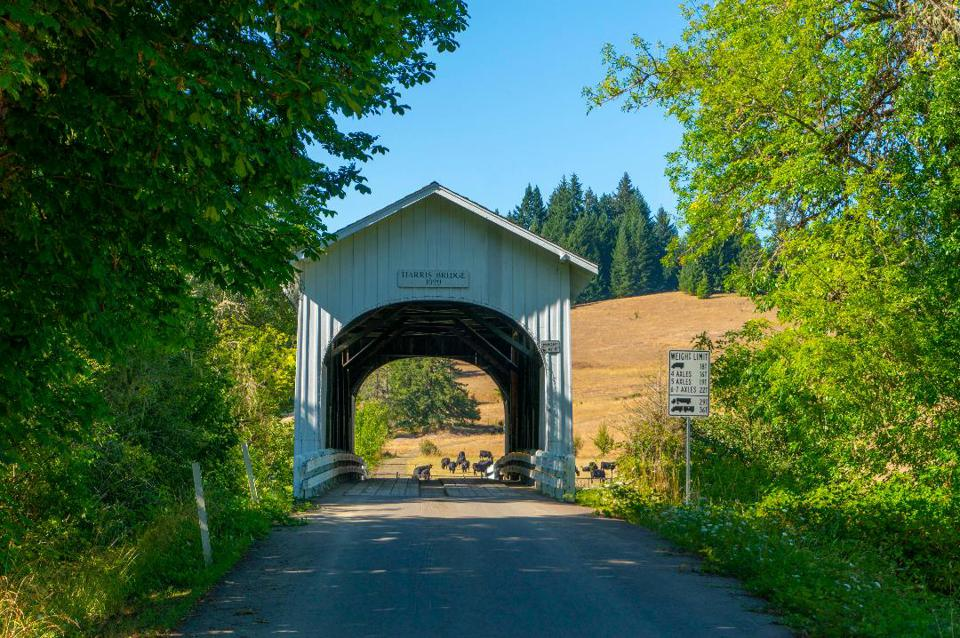 A white, covered bridge with cows in the background.