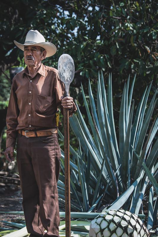 A Jimador Harvesting Agave