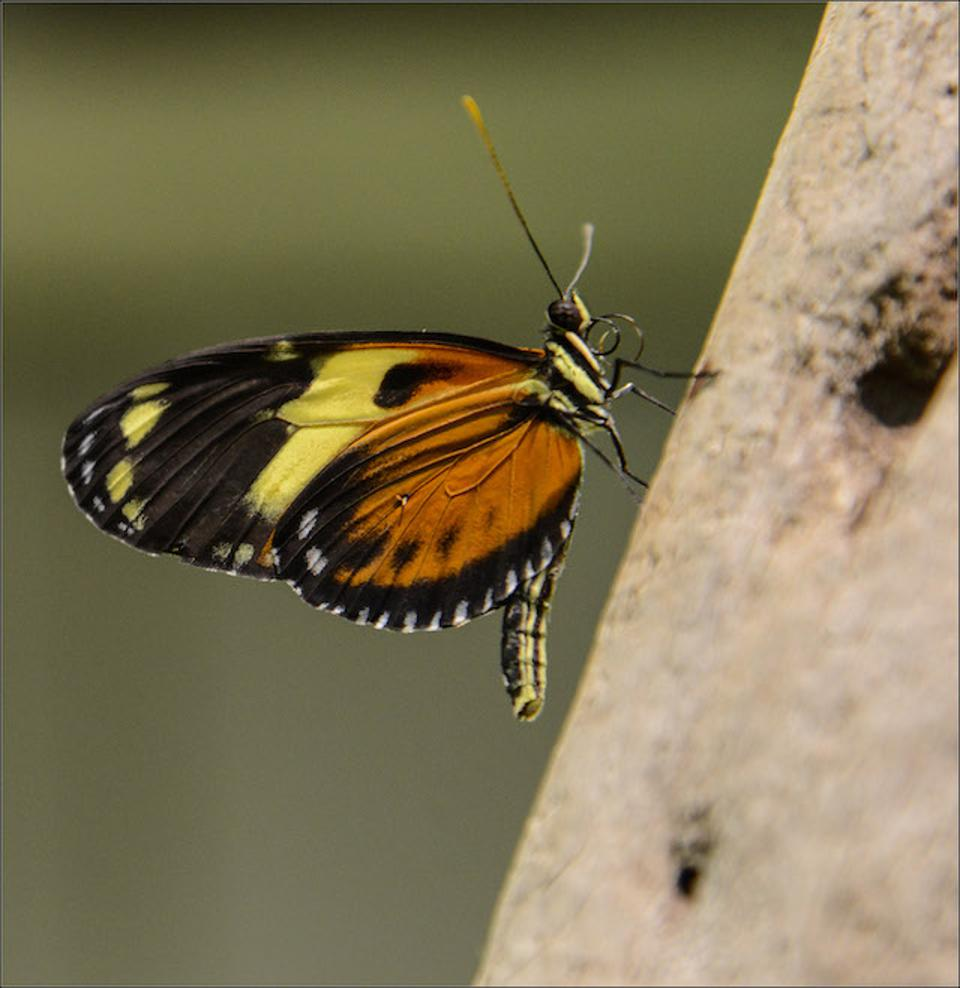 The climate-controlled environment of the Butterfly Conservatory is set at 80 degrees.