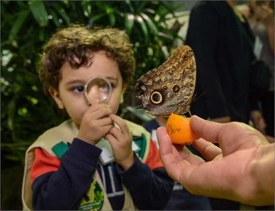 Young children will appreciate the up-close opportunities to observe butterflies.