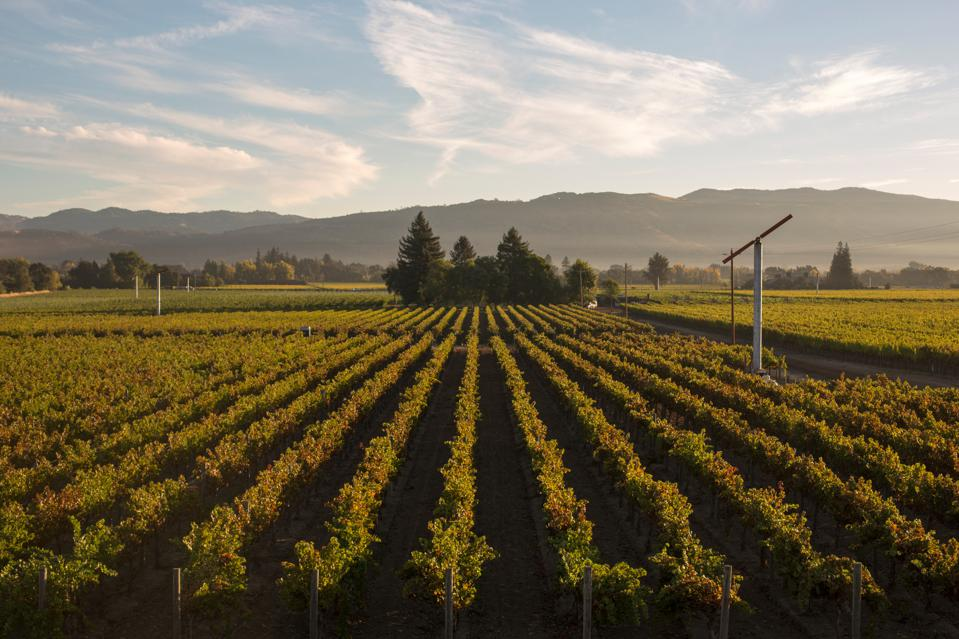 BV Vineyard Landscape Shot