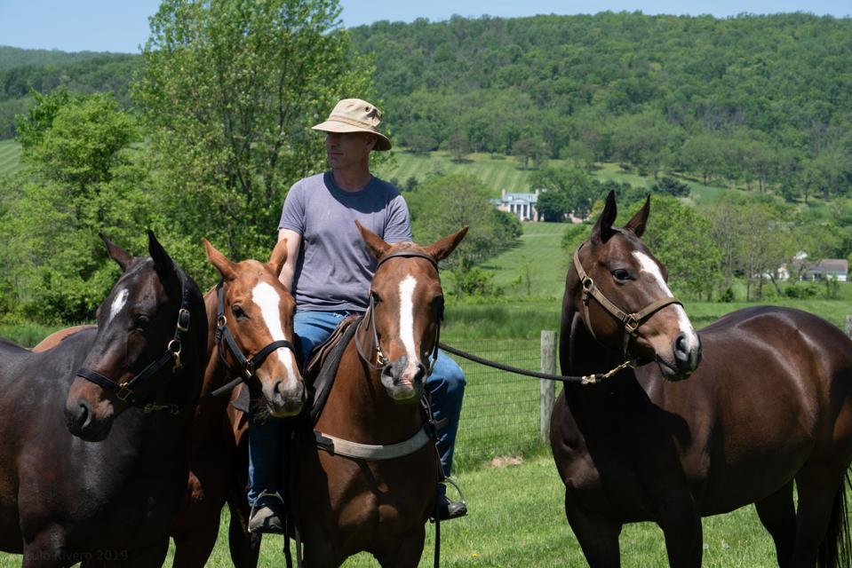 Llangollen horses