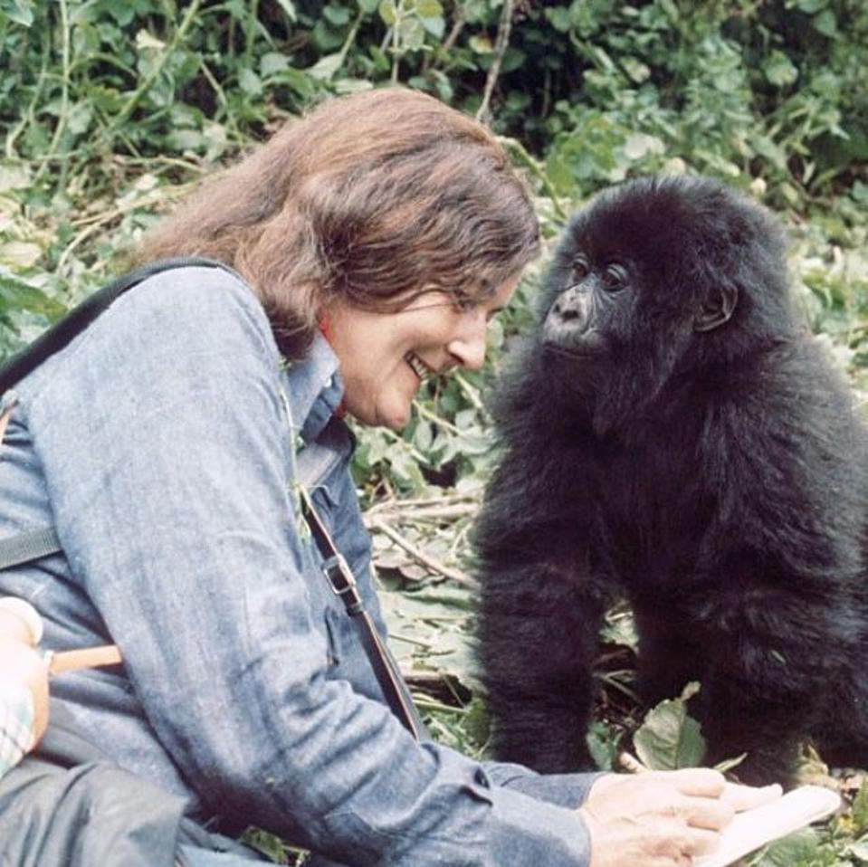Dian Fossey.  Uganda. Rwanda. Mountain gorillas.