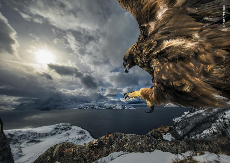 Земя на орел