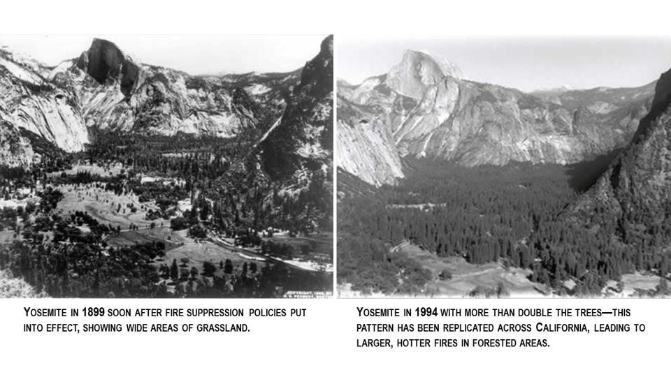 Tree density in Yosemite has more than doubled over the past 100 years.
