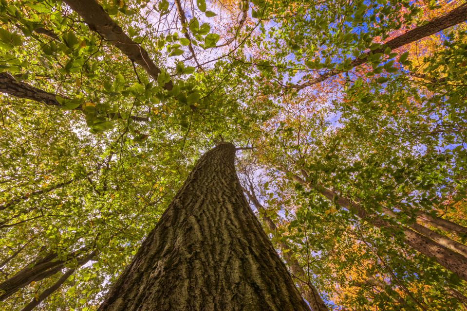 Green Bonds To Conserve Millions Of Acres Of At-Risk Forests, Like These