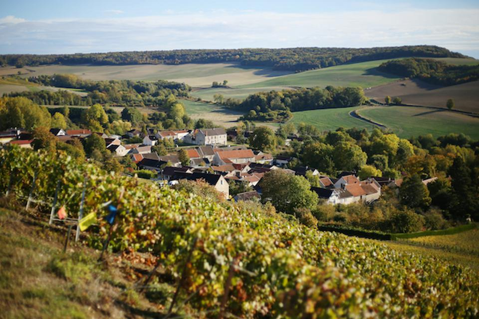 The Champagne wine region of France