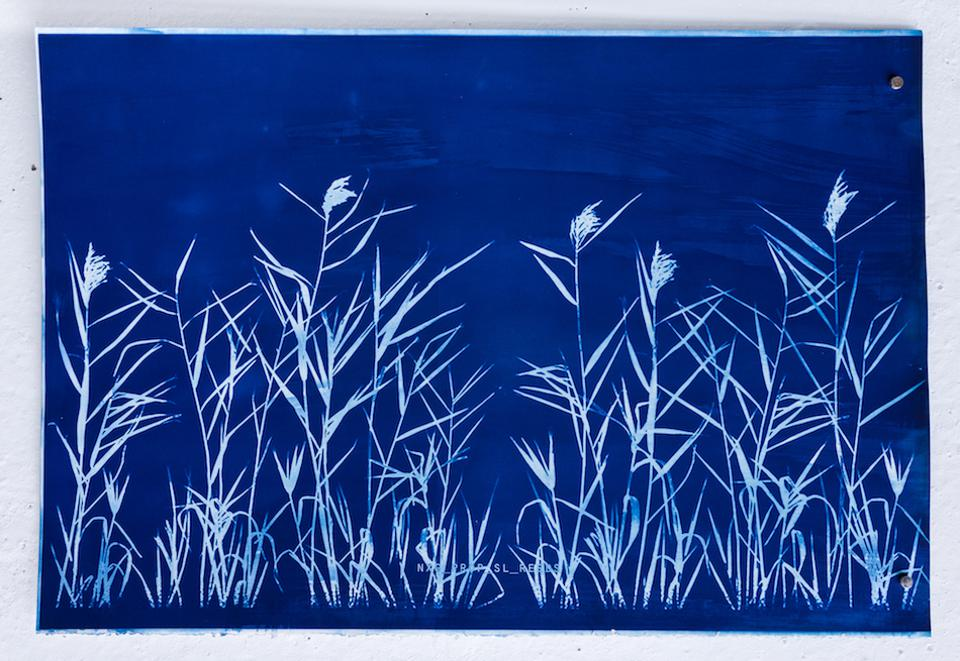 A unique cyanotype by Alan Butler whose work was shown at Vienna Contemporary