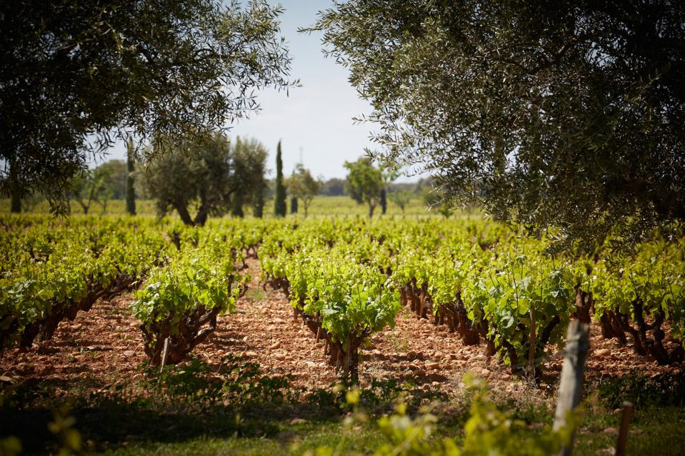 Southern Rhône wine, French wine, wine from Provence, organic wine