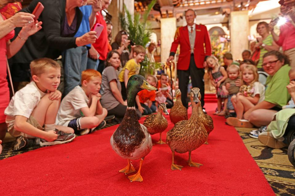 Peabody Hotel Duck March