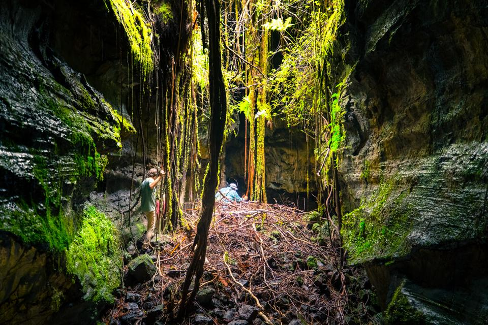 Lava tubes often contain ″skylights,″ allowing for sun and plant life.