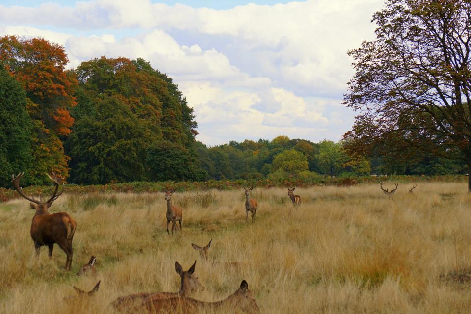 Richmond Park in Autumn