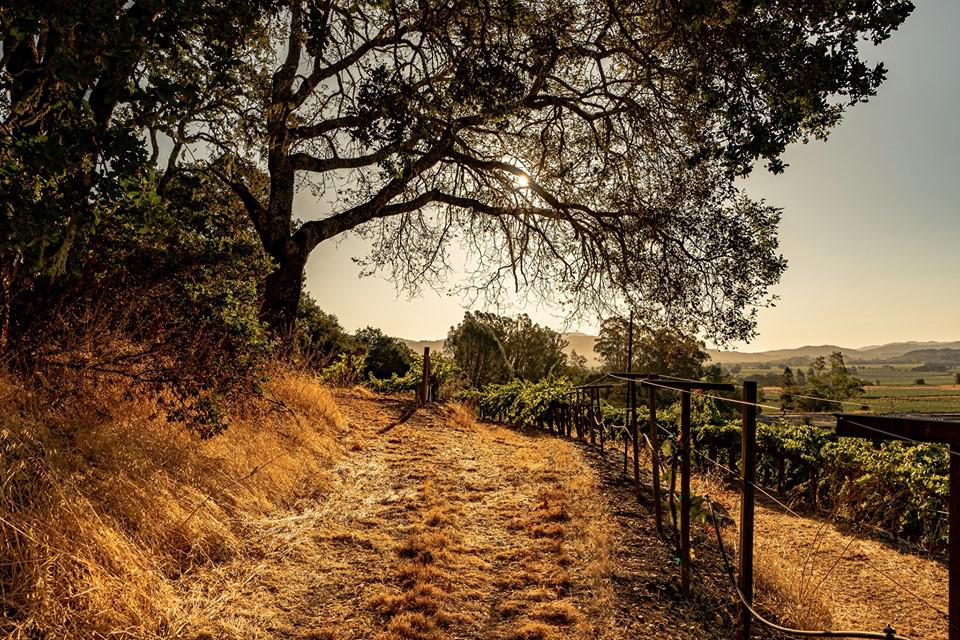 A Dirt Road Leading to One of Francis Ford Coppola Winery's Vineyards
