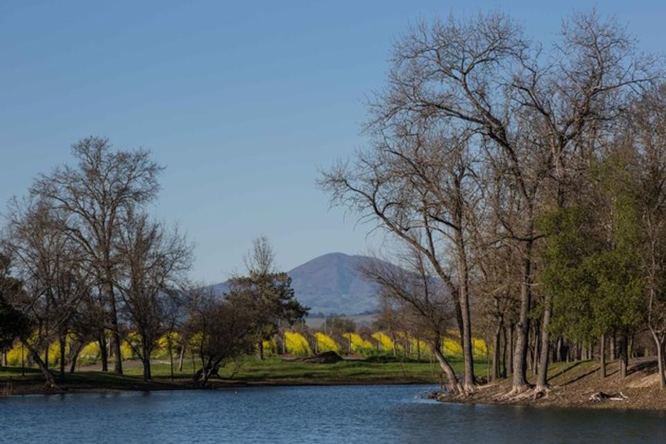 Wide View of Dutton Estate Vineyards