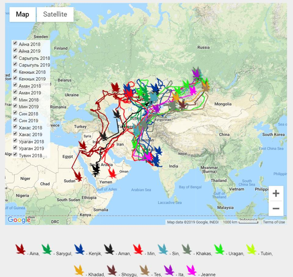 A map of the steppe eagles' movements from the Raptor Migration Research Programme website.