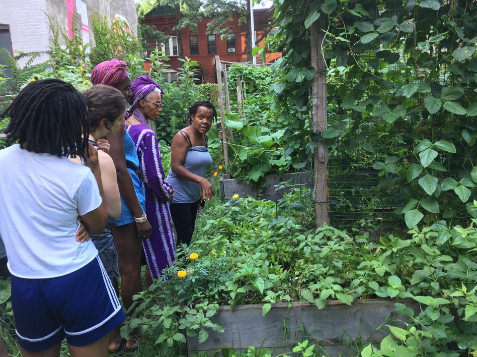462 Halsey Community Gardens, where many West Indian residents grow their own produce,