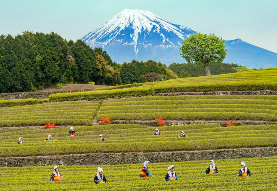These Gorgeous Photos Will Make You Want To Book A Trip To Japan ASAP