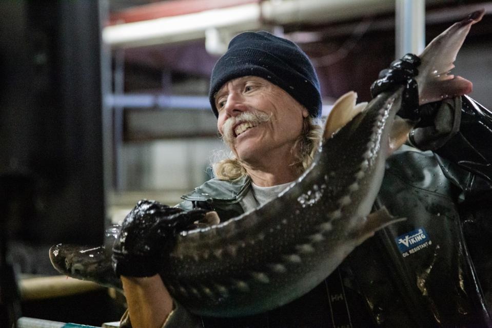 Ed Cook, a fish technician with a White Sturgeon