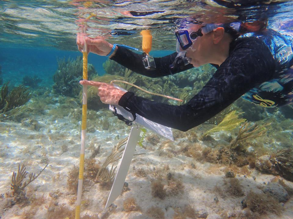 A scientist from the Central Caribbean Marine Institute studying coral off of Little Cayman.