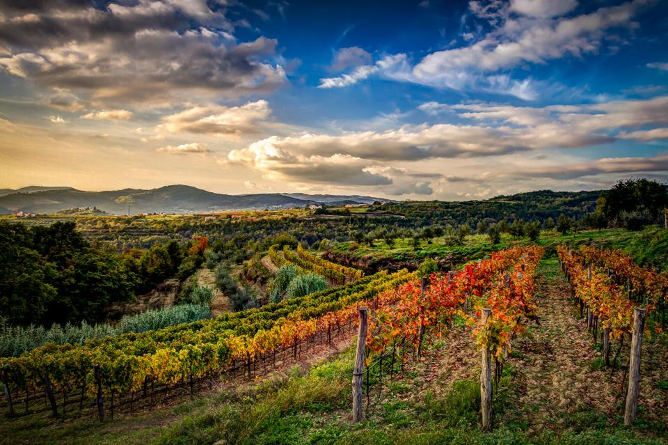 Landscape of Istria