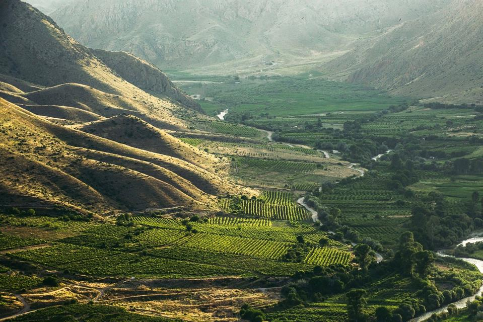 Vineyards in Armenia
