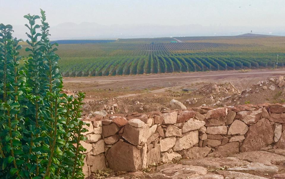 Vineyards at Karas Wines