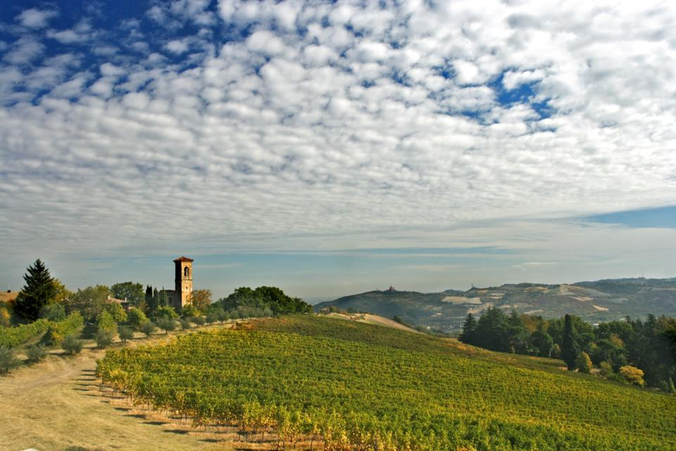 Hilly wine country in Emilia-Romagna