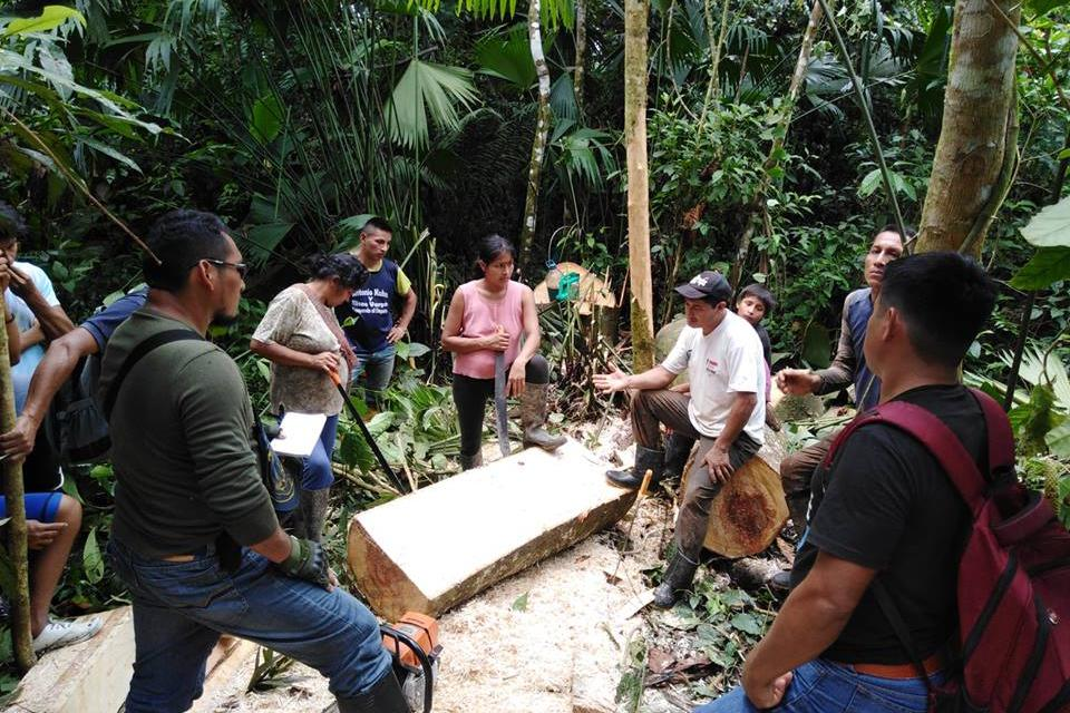 Illegal loggers caught in the Amazon