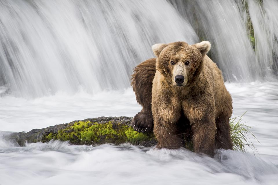 Want To Be A Wildlife Photographer? Here Are 5 Tips From A Pro