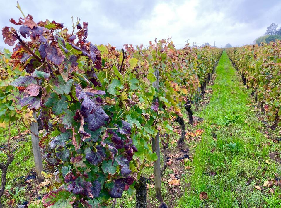 Vineyards after harvest in Saint-Émilion, Bordeaux