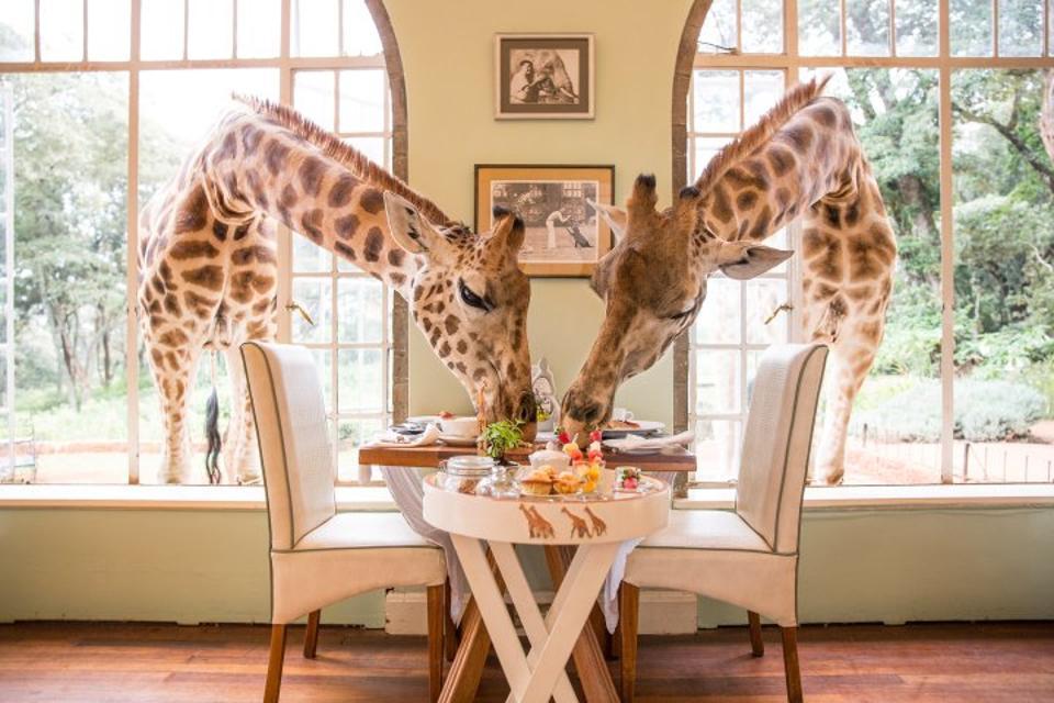 Manor Hotel Giraffe Kenija Črni rob Concierge Luxury Travel Nacer Tazi