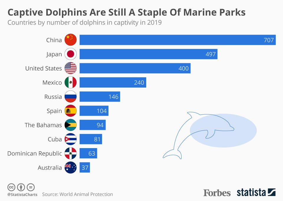 Captive Dolphins Are Still A Staple Of Marine Parks