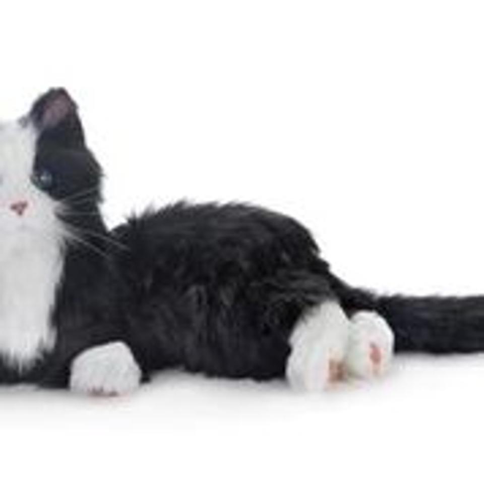 Companion Cat