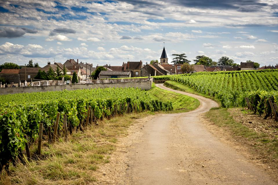 Burgundy, a panoramic road that crosses the wine region and makes us know the major producers and their vineyard. France
