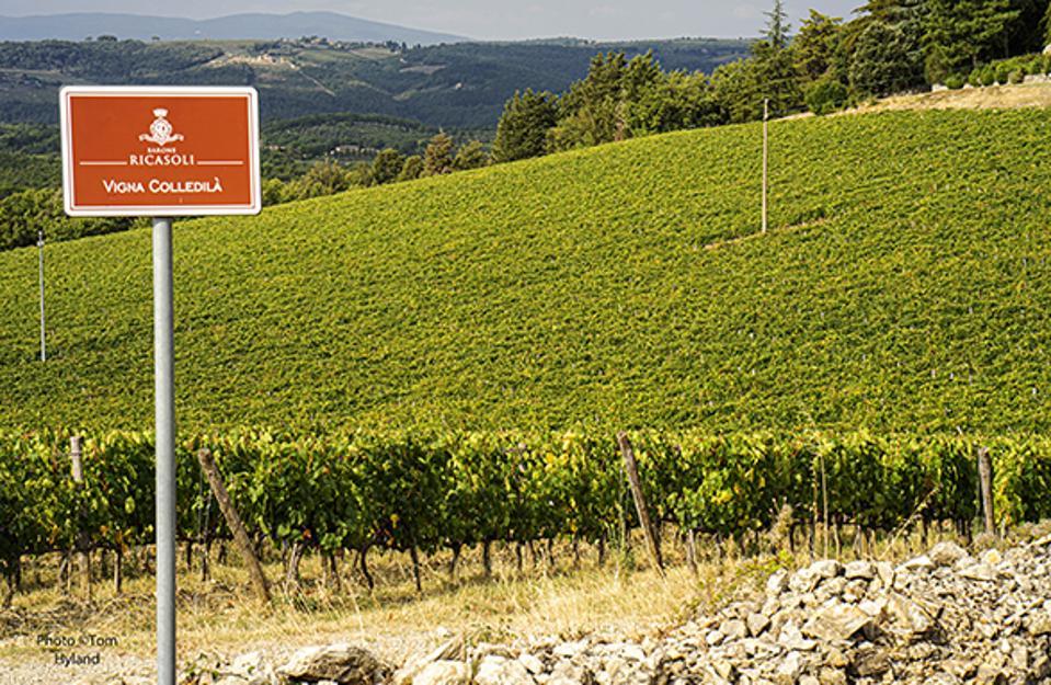 Gran Selezione - The Leading Path For Chianti Classico