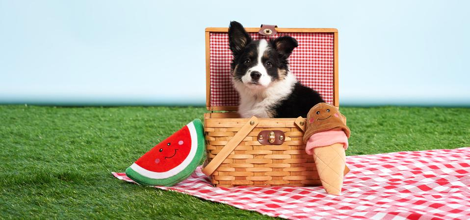 A picture of a dog sitting in a picnic basket with a watermelon and an ice cream cone chew toy
