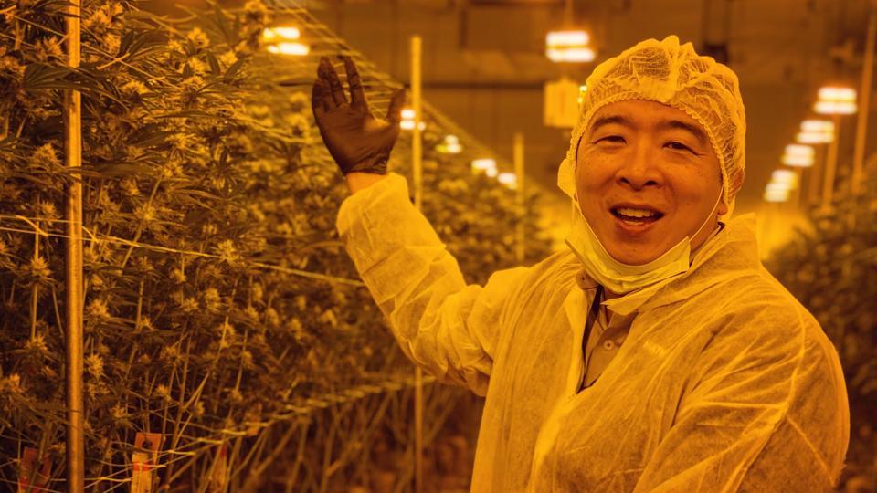 Andrew Yang marijuana planrs