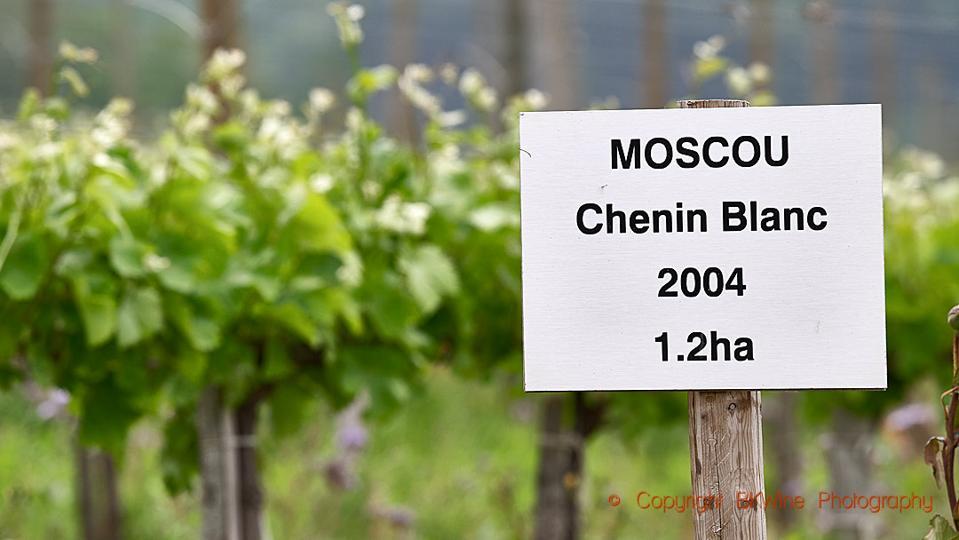 Domaine Gayda, Moscou vineyard with chenin blanc