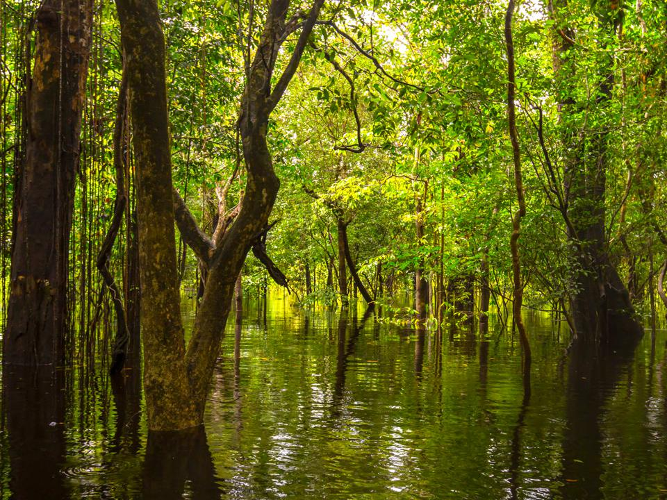 In the flooded forest, Rio Negro