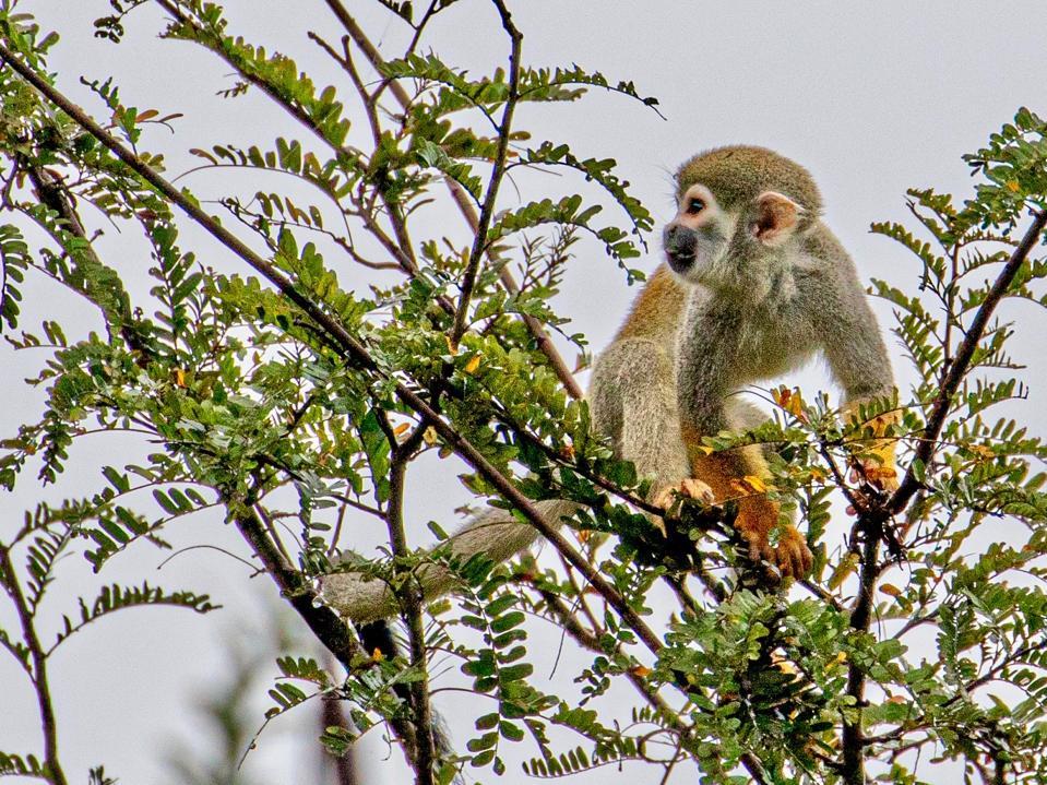 Photo taken during Amazon Nature Tour