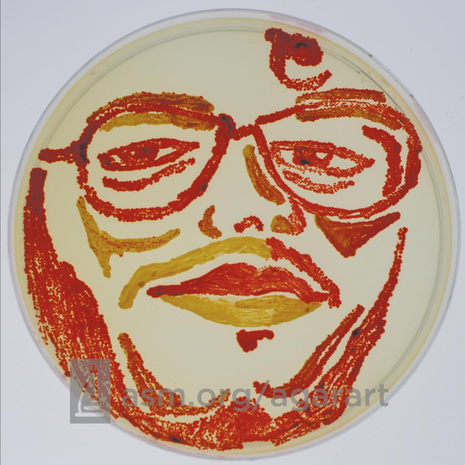 Portrait made using bacteria on an agar plate
